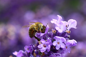 bee insect nature photography photographer Stoud