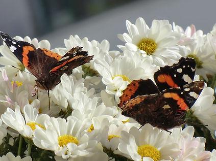 Natur im Einklang, Schönheit