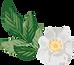 fleur blanche  - Les Doux Moments