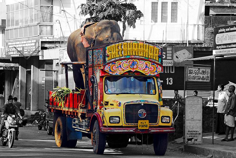 Elephant stop