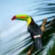 oiseaux-9.jpg