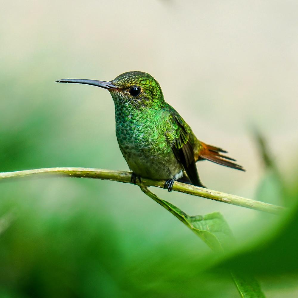 Wild nature Costa Rica
