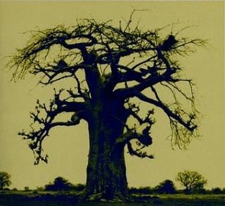 baobab-cover.jpg