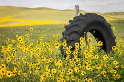 Sunflower Tire