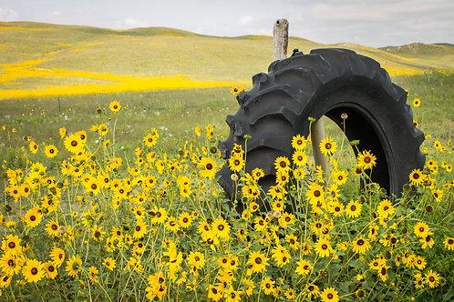 """""""Sunflower Tire"""""""
