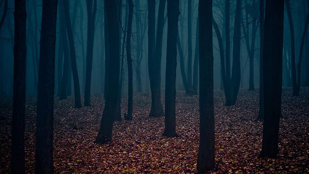 wp5343124-scary-woods-wallpapers.jpg