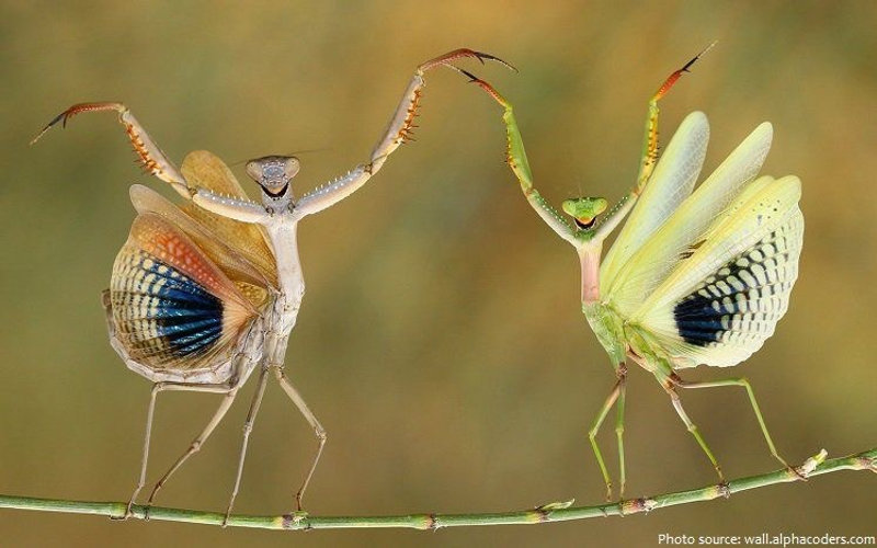 dansande_fjärilar.JPG