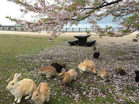 Ōkunoshima, Rabbit Island, Hiroshima, Hotel
