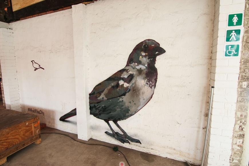 Birds-1 copy.jpg