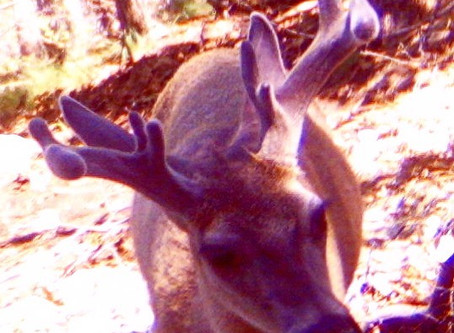 Follow Along on Our Archery Deer Scouting