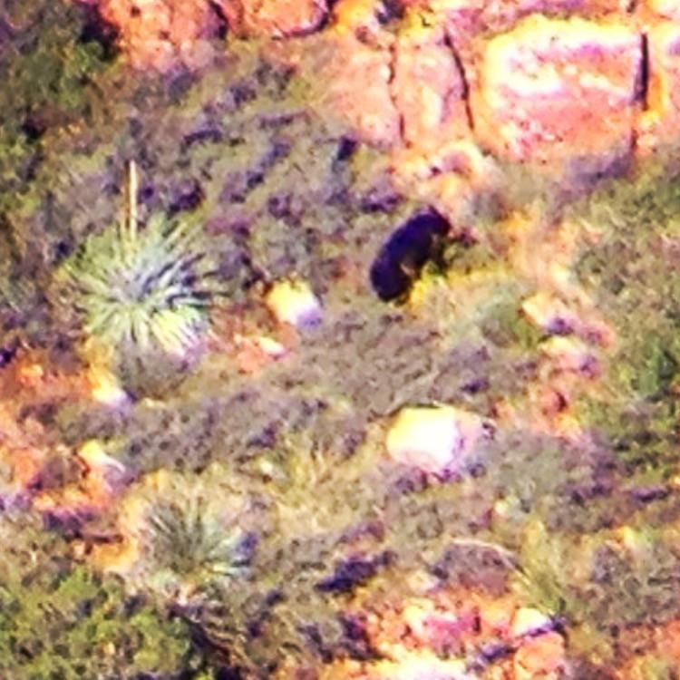 bears in the pears unit 23 arizona