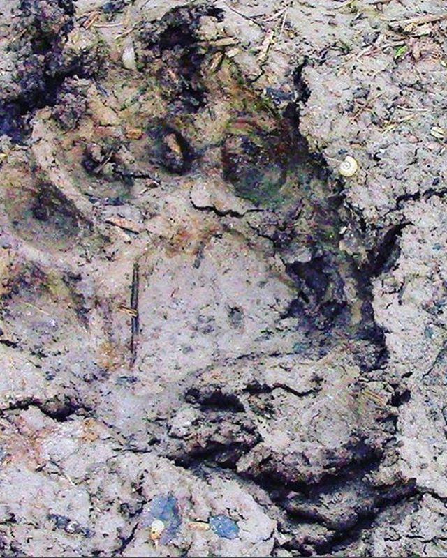 bear track arizona