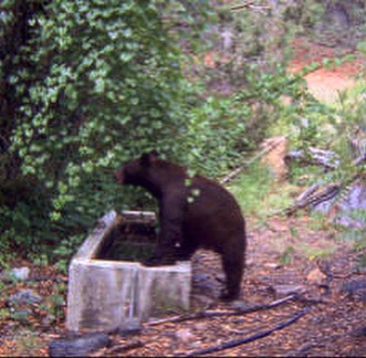 fall spring over the counter arizona bear hunting