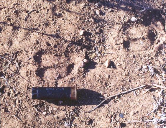Arizona Javelina tracks