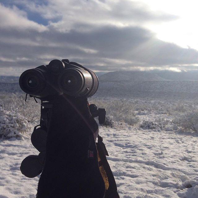 arizona desert snow deer hunting archery