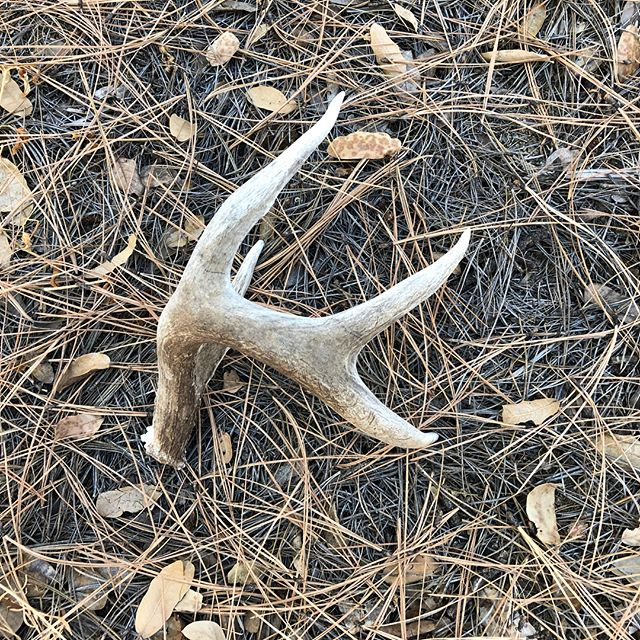 Ha! I never find sheds