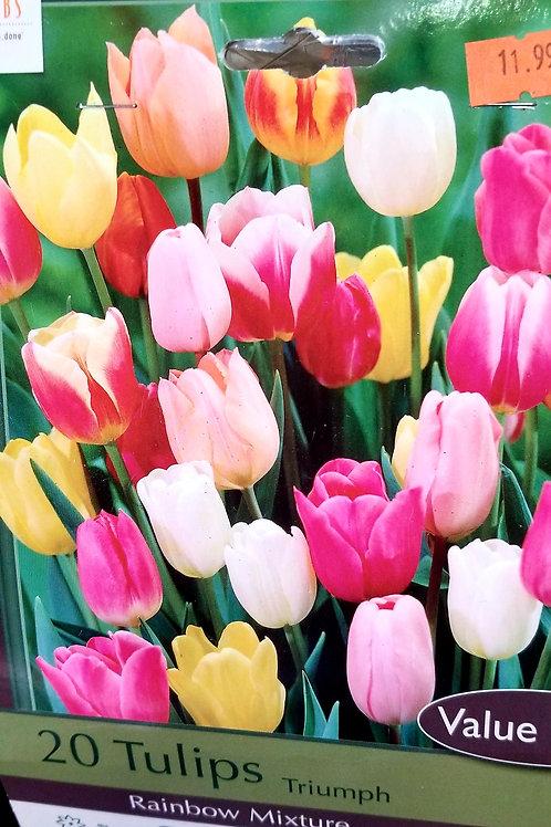 Tulip Bulbs 20 Count Bag