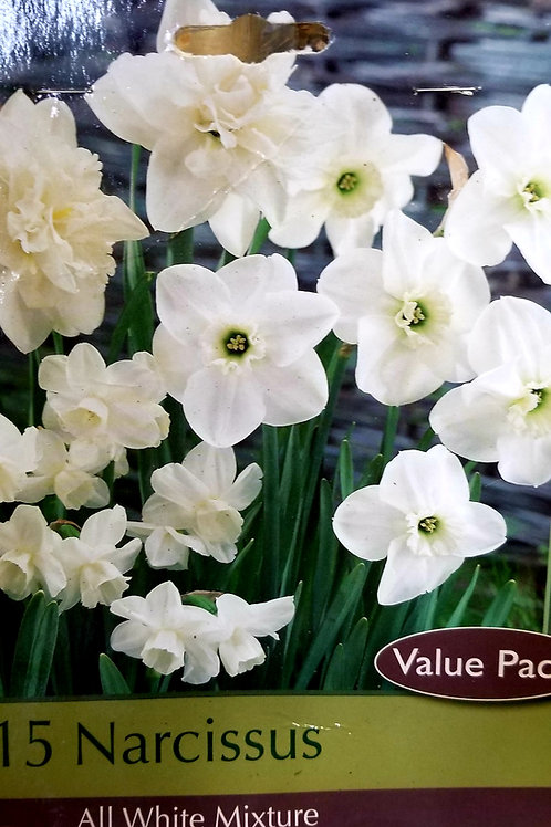 Narcissus All White Mix 15 Count Bag