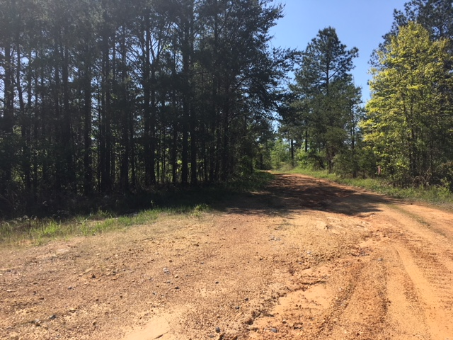 alabama land for sale (19)