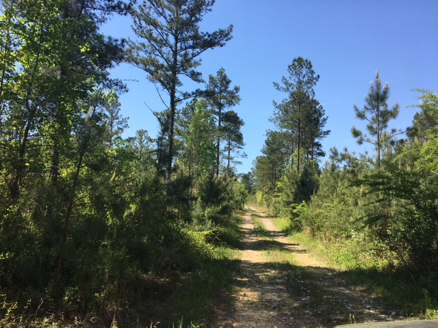 alabama land for sale (12)