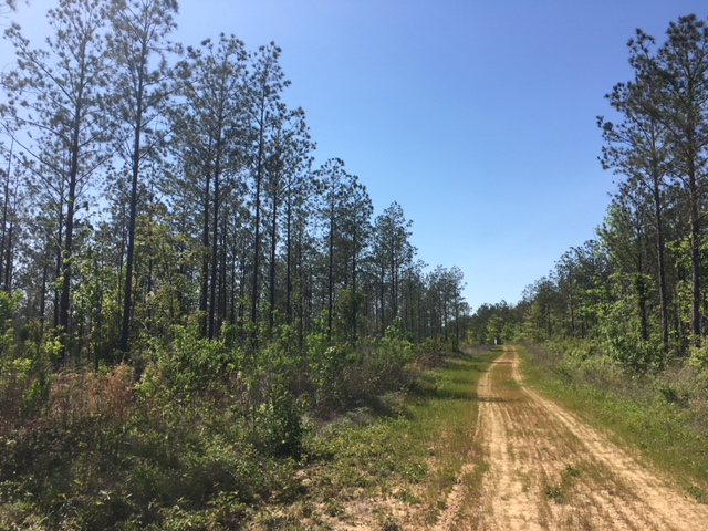 alabama land for sale (1)