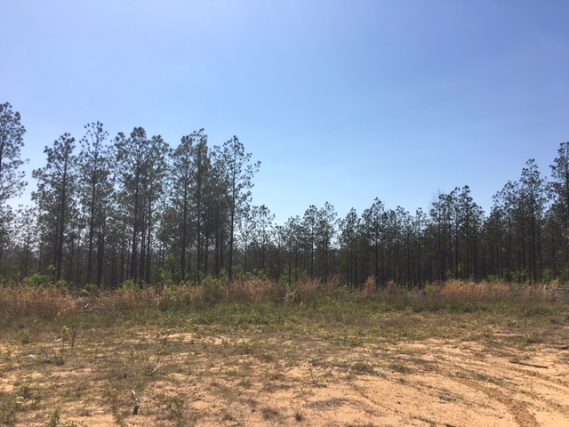 alabama land for sale (26)