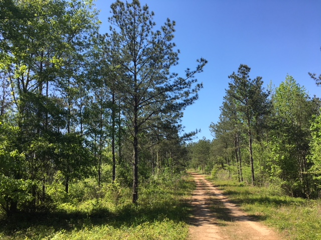 alabama land for sale (25)