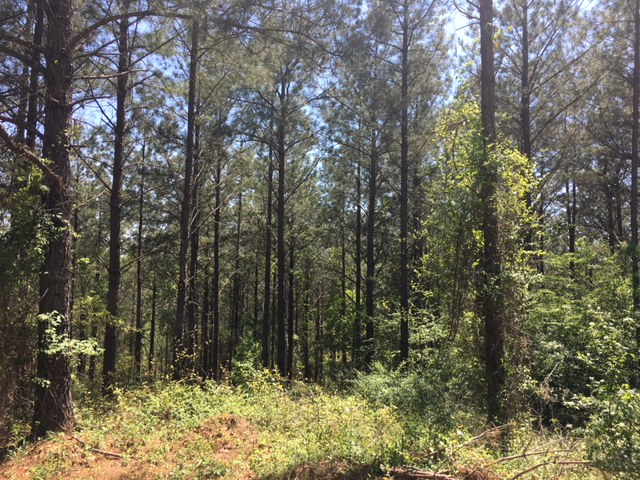 alabama land for sale (7)