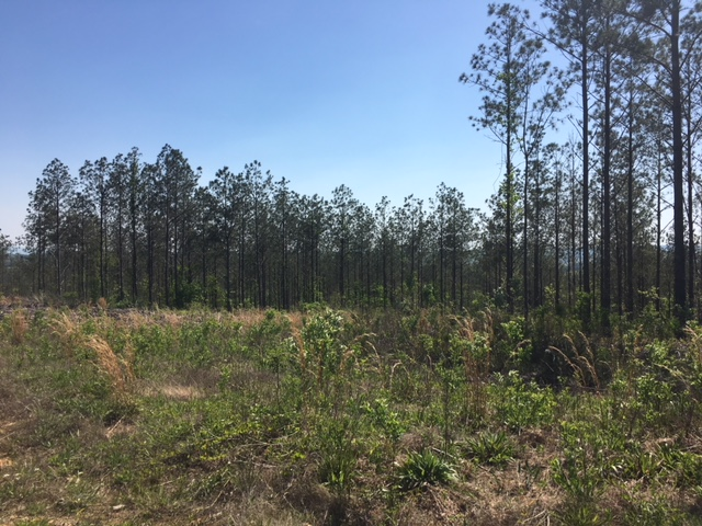 alabama land for sale (27)