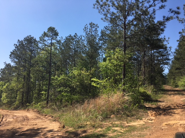 alabama land for sale (23)