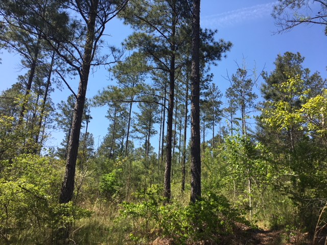 alabama land for sale (15)