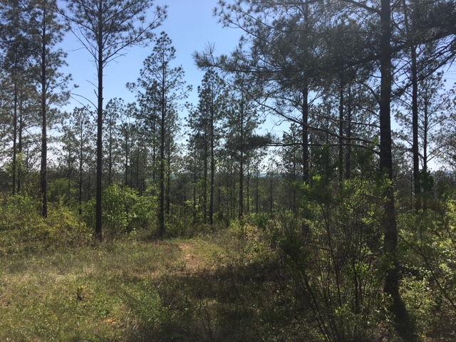 alabama land for sale (24)