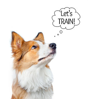 let's train.jpg