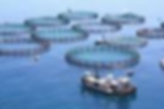Aqualculture Farm 1.jpg