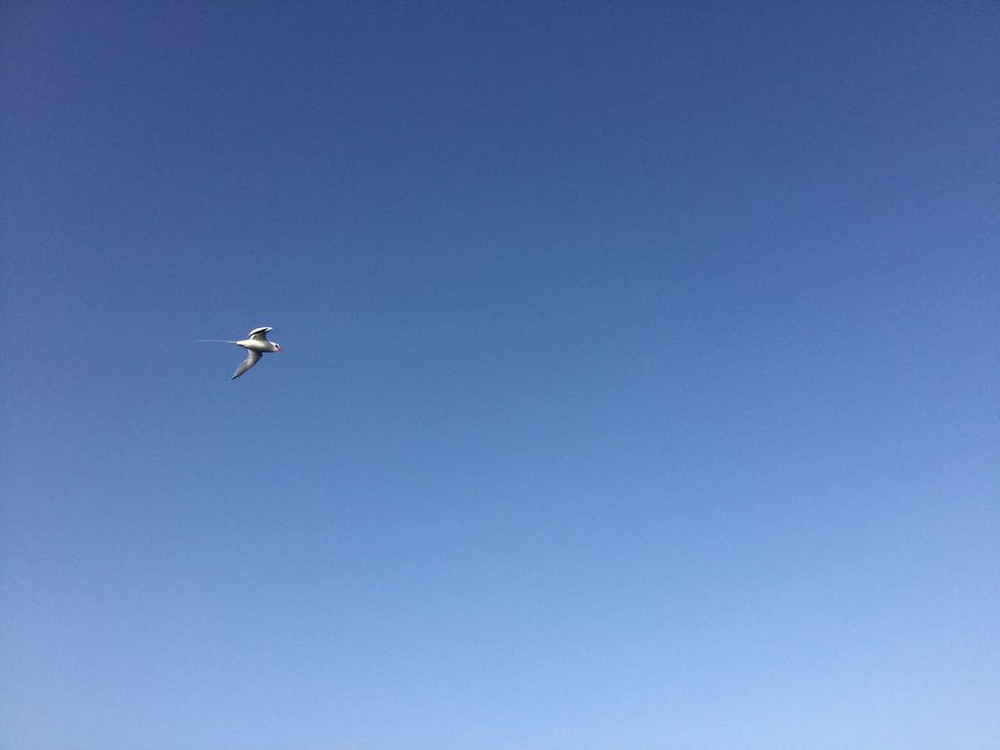The bird following the boys