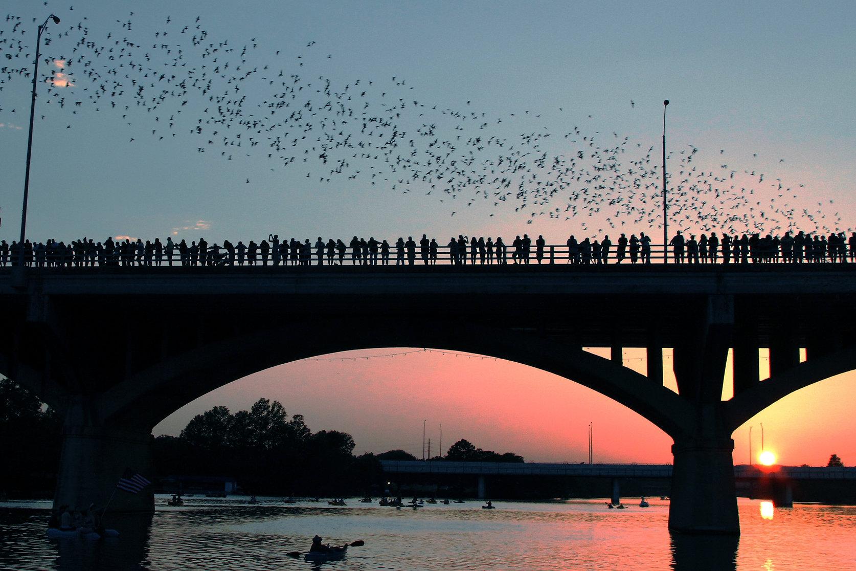 Congress Avenue Bridge bats in Austin du