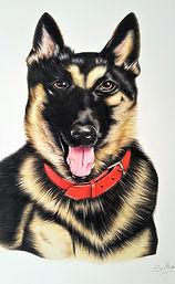 Dog Portrait Rocky December 2018 (2).jpg