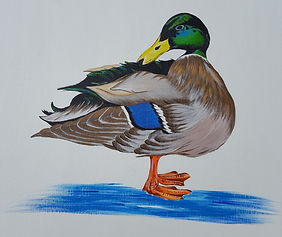 Duck painting Acrylics.jpg