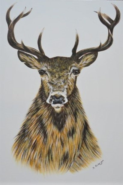 Stag Painting  ***SOLD***
