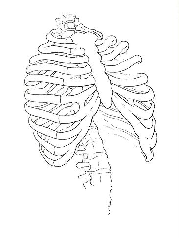 upper spine image.HEIC
