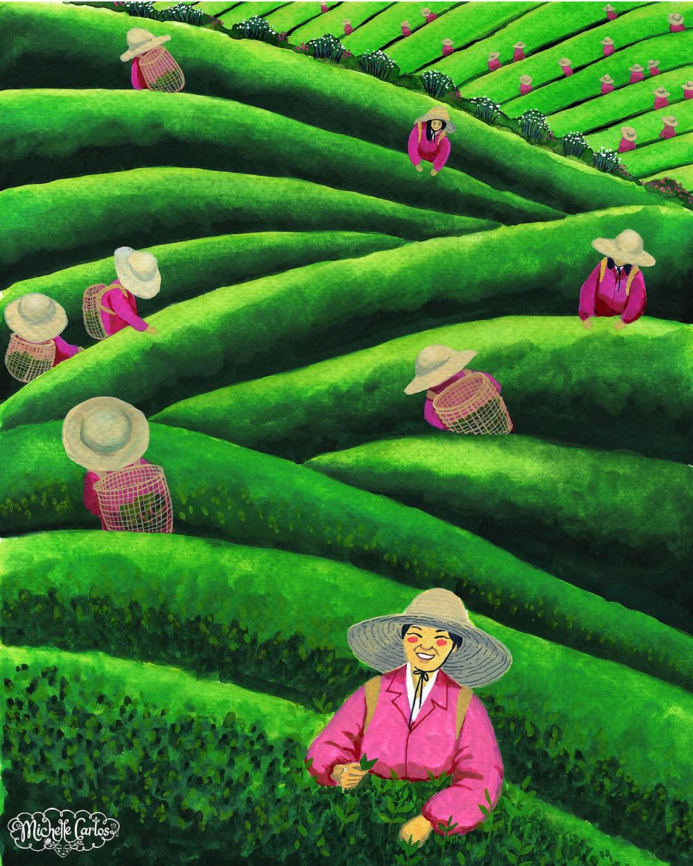 Tea farmers harvesting tea