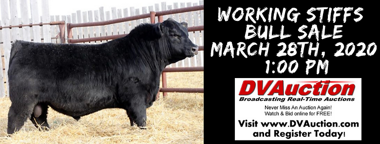 working stiffs bull sale march 28th, 202