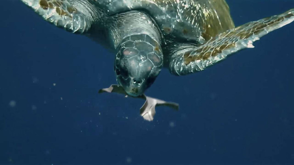 Biodegradable beer can packaging that feeds turtles