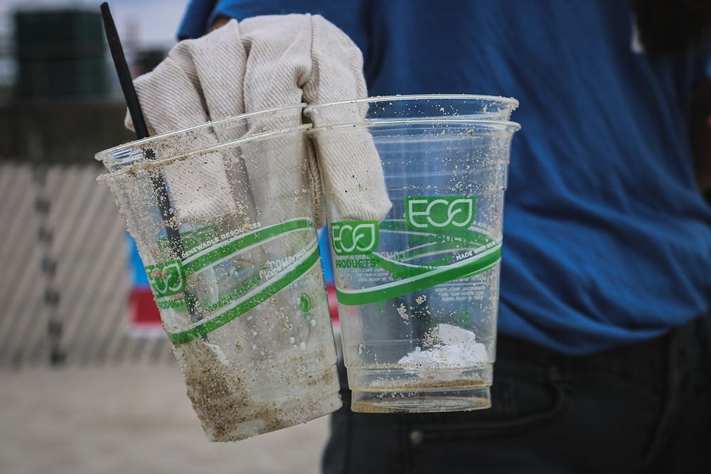 gloved hand holding clear bioplastic eco cups that are dirtied with sand having been discarded on the beach. Bioplastics do not solve the plastic pollution problem.