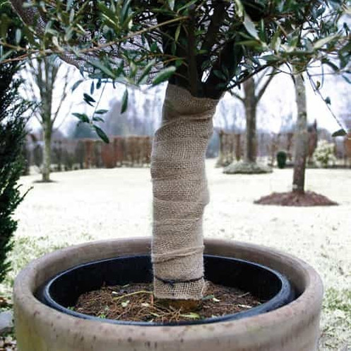 jute tree wrap around stem of potted tree