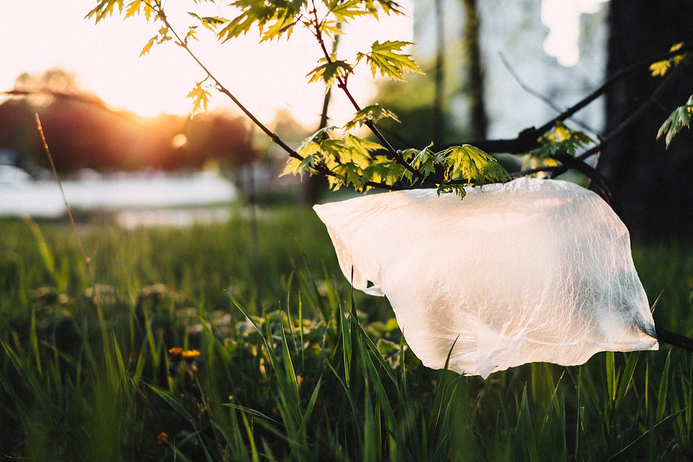 a polyethylene bag stuck on a plant limb blowing in the wind against a backdrop of grass and sunset sky