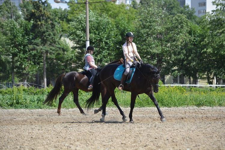Лошади, конный спорт, занятия верховой ездой, обучение верховой езде, Школа Верховой Езды на Центральном Московском Ипподроме, конный клуб, выездка, конкур, троеборье, конные прогулки, фотосессии с лошадьми.