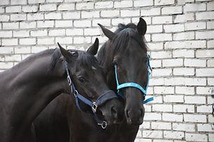 Конный спорт, лошади, верховая езда, обу