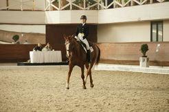 Лошади, конный спорт, занятия верховой ездой, обучение верховой езде, Школа Верховой Езды на Центральном Московском Ипподроме, конный клуб, выездка, конкур, троеборье, конные прогулки, фотосессии с лошадьми.Q.jpg
