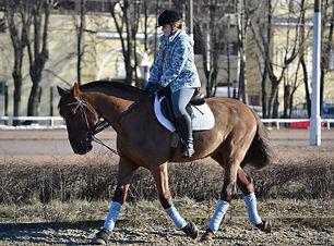 Конный спорт, тренировки, лошади, верхов